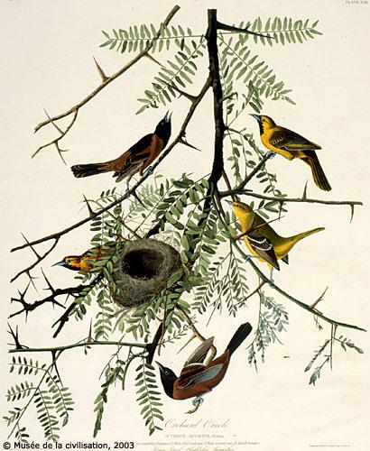 Audubonbirds_2
